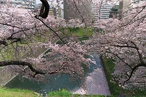 2011.04.11 皇居 北の丸公園 牛ヶ淵.jpg