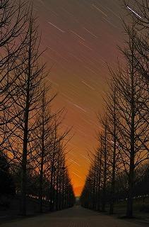 3471215sanaai並木道と星跡.jpg