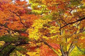 431d0dee-s広島城と紅葉_1.jpg