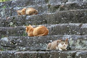 6141809和歌山城の野良猫.jpg