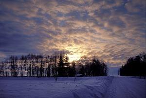 618696夕暮れの雪道.jpg