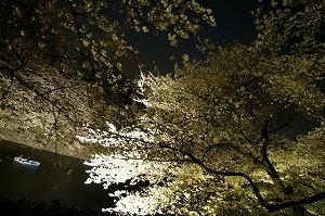 8872835夜桜とボート.jpg