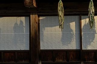 9714045旧家の軒とカラトリイモ by zzr.jpg
