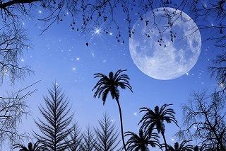 9728399月夜 by coco-A.jpg